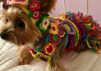 Dudley the Yorkie all dressed up